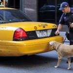 Police drug dogs